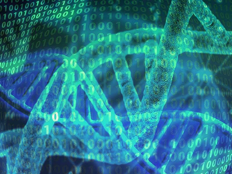 DNA og udvikling